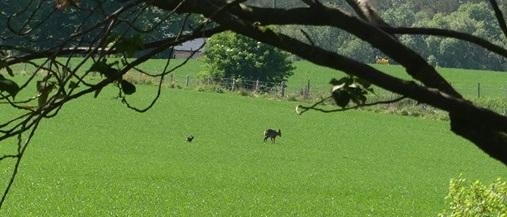 bambi crop2